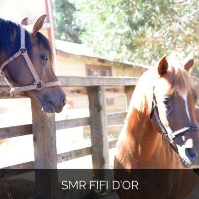SMR Fifi d'Or