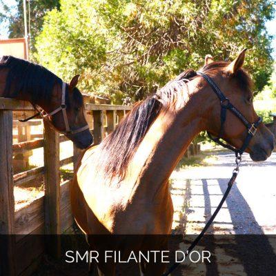 SMR Filante d'Or